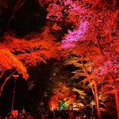 cd4bbce7eb3 Instagram media by kyoto fan jp - 〜下鴨神社 糺の森 呼応する木々〜