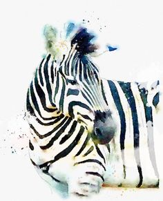 ❤ Zebra Watercolor Digital Download available on Etsy. Beautiful!!