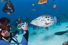 7 Tipps für gelungene GoPro Unterwasseraufnahmen. #australien #tauchen