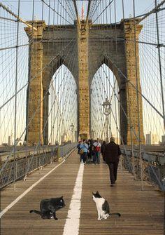 Cat Print: George And Billy On The Brooklyn Bridge | Deborah Julian Art