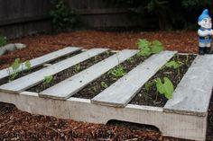 pallet gardening fail