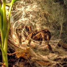 Tarántula.... Natural History Museum, Frankfurt. There is a temporary exhibition…
