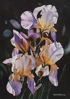 Irises by Monika Pate Watercolor ~ 29 x 21