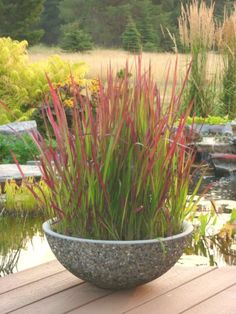Colorful Pampas Grass Seeds Home Garden DIY Plants Easy Grow RLWH 01