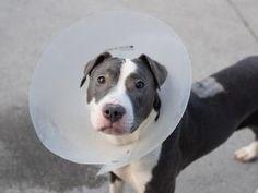 www.PetHarbor.com Animal Search: ADOPTABLE