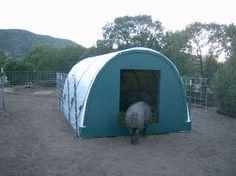 Flying H Ranch - Large Black Hogs, Pastured Pork, Artisan Pork, Heritage Pork, Rowe NM USA: Hog Hooch (Cattle Panel Hoop House)