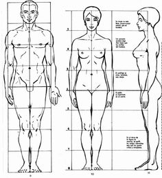 proportions, anatomy / пропорции человека, анатомия