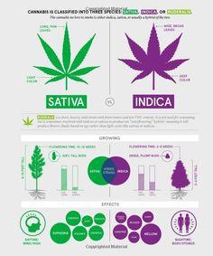 Green: A Field Guide to Marijuana: Dan Michaels, Erik Christiansen: 9781452134055: Amazon.com: Books