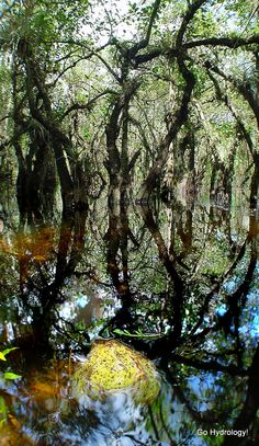 Go Hydrology! blog, inside cypress dome