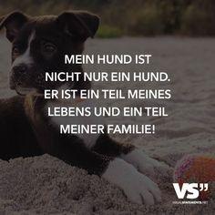 Mein Hund ist nicht nur ein Hund. Er ist ein Teil meines Lebens und ein Teil meiner Familie.