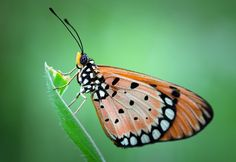 Butterfly by Lo Ma, via 500px