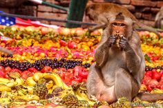 This Thailand Festival Is All About Monkeys Feasting At An All-You-Can-Eat Buffet: Every November, townspeople of Lopburi, Thailand get together to organise a decadent fare for monkeys as part of the Monkey Buffet Festival.