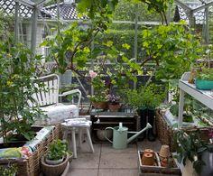 Drømmer du om en smuk oase i haven, hvor du kan dyrke dine egne solmodne… Garden Shed Interiors, Greenhouse Interiors, Greenhouse Shed, Greenhouse Gardening, Small Greenhouse, Love Garden, Garden Shop, Back Gardens, Outdoor Gardens