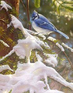 ...Blue Jay