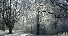 Winter in Beatrixpark, Amsterdam