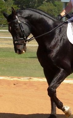 Training Your Horse (Riding Aids Explained)