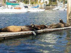 Visitors to Oceanside, California.