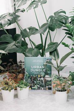 urban jungle book in french. Black Bedroom Furniture Sets. Home Design Ideas
