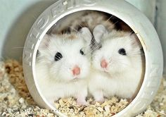 A 30 Cute and Adorable Hamster Photography Collection on http://naldzgraphics.net