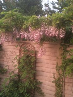 June 2016 wisteria back border