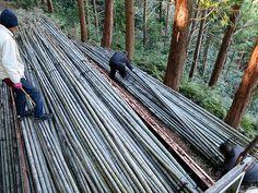 竹虎四代目がゆく!「竹屋の手かぎ」 山だし 虎斑竹 虎竹 tigerbamboo bamboo 虎斑竹専門店 竹虎