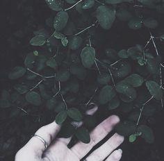 Earth, nature, leaves