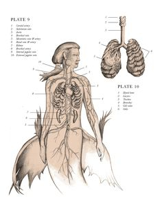 From the wickedly creative mind of artist and author E.B. Hudspeth comes a series of illustrations depicting mythological beasts in the meticulously labeled style of anatomy textbooks.