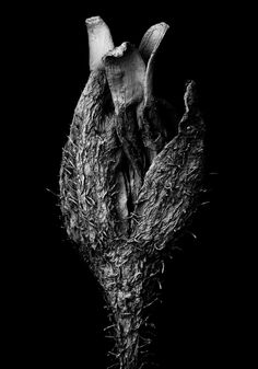 Micro Art / Withered plant | SEM (Scanning Electron Microscope) | Width of the image 2.6mm