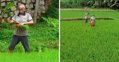 Following a sustainable lifestyle, Uma Maheshwaran and his wife, Rajasree, have been cultivating their land for the past 12 years and ensured that their whole family partakes in the farming activities. This family has also adopted the art of self-sustenance as a way of life. They grow everything they eat — rice or vegetables in their 20-cent plot in Vilavoorkkal, Thiruvanathapuram, Kerala.