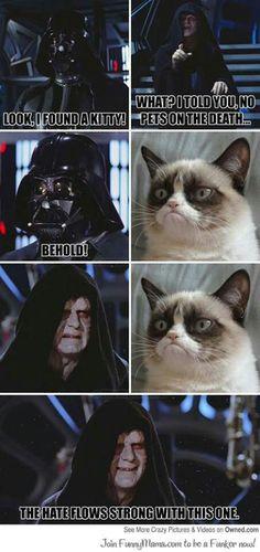 Grunpy cat