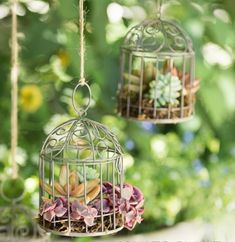Jaulas con plantas suculentas Creepy Pasta Family, Bird Feeders, Outdoor Decor, House, Home Decor, Gardens, Landscaping, Hanging Gardens, Hanging Plants