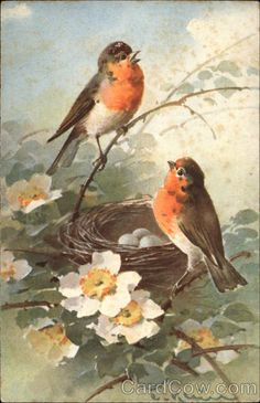 Two Robins at their Nest C. Klein Birds. Vintage postcard.