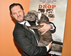 Tom Hardy With a Pit Bull Puppy at the Premiere of The Drop | Photos | POPSUGAR Celebrity