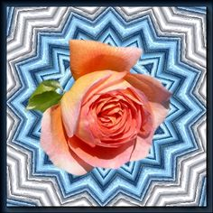 Rose, Tableware, Flowers, Plants, Pink, Dinnerware, Tablewares, Plant, Roses