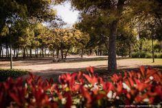 Fotos: Isaias Mena - Ajuntament de Tarragona Sidewalk, Florida, Pictures, Side Walkway, The Florida, Walkway, Walkways, Pavement