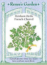How To Grow Chervil | Herb Gardening Guide