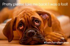 Please take me back! I was a fool! #SwitchersRemorse