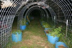 Garden Trellis, Edible Garden, Vegetable Garden, Cattle Panels, Garden Structures, Garden Projects, Garden Ideas, Aquaponics, The Ranch