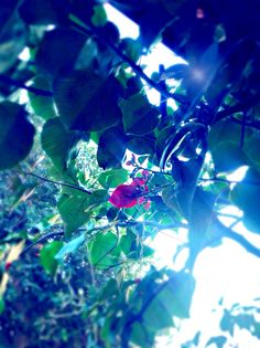 Took a photo of a random plant in my backyard and edited it. :P