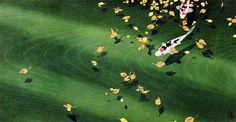 """Tsuzen Nakajima.Nacido en Tokio en 1944.Sus grabados son como los antiguos, utilizando bloques de madera donde la veta toma un protagonismo único y se convierte en parte de la textura del grabado.El llama a sus obras """"Hangiga"""". Usa colores translúcidos y composiciones muy simples inspiradas en los maestros japoneses tradicionales de Ukiyoe, aunque le da su toque personal de modernidad."""