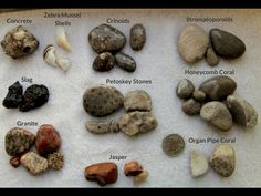 Various rocks sorted out by type on a piece of white pastic