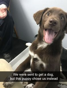 25+ Funny And Cute Dog Snapchats That Will Make Your Day (New Pics) Cute Dog Pictures, Funny Animal Pictures, Cute Funny Animals, Funny Dogs, Cute Dogs And Cats, All Dogs, Adorable Dogs, Beautiful Dogs, Animals Beautiful