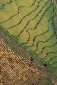 Aerial view of rice harvesting on a farm.