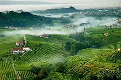 Touring the countryside of Valdobbiadene Italy and tasting all of the prosecco would be amazing #HipmunkBL