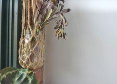 Macrame_Mason_Jar_Planter11 Mason Jar Planter, Hanging Mason Jars, Something Beautiful, Plant Hanger, Macrame, Planters, Weaving, Craft Ideas, Garden