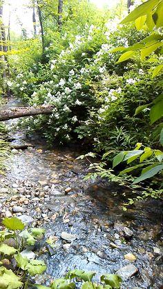 Rustic Gardens, Unique Gardens, Amazing Gardens, Outdoor Gardens, Most Beautiful Gardens, Japanese Garden Design, Garden Landscape Design, Woodland Garden, Forest Garden