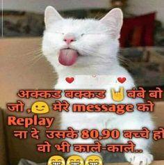 Best Funny Cat Memes Images – Funny Cat Images Download – Funny Cat Pics Funny Cat Captions, Funny Cat Images, Funny Cat Pictures, Funny Cats, Cute Funny Quotes, Fun Quotes, Best Quotes, Funny Jokes, Cat Memes
