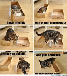 Kittys love for Boxes
