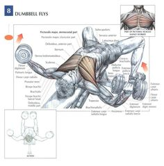 Angle variation on flyes allows more muscle fibers recruitment in the pectoralis. Ideal for strength and mass gains to further develop the chest.