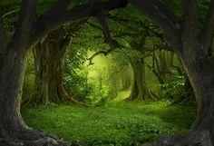 Secret Forest Big Tree Green Backdrop for Photo Studio LV-837